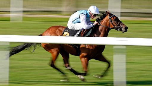 แทงม้าสโบเบท วิธีแข่งม้าเสมือนจริงออนไลน์ SBOBET
